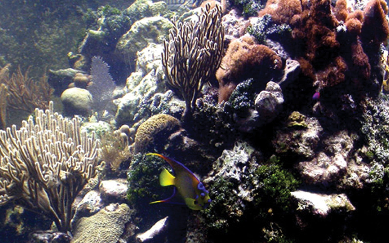 Smithsonian Contributions to the Marine Sciences  banner